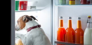 Real Food your Dog can Eat